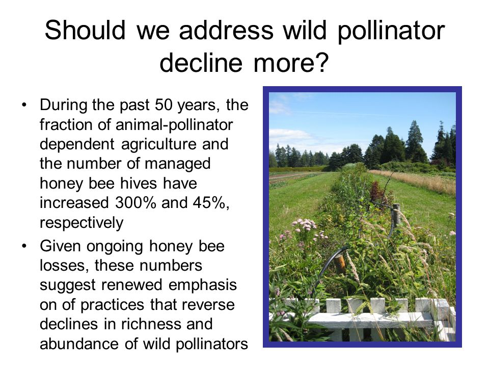 Should we address wild pollinator decline more.