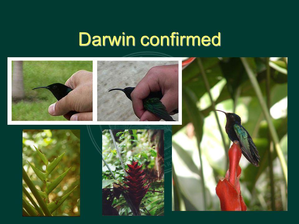 Darwin confirmed