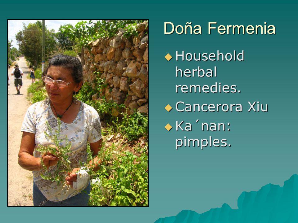 Doña Fermenia  Household herbal remedies.  Cancerora Xiu  Ka´nan: pimples.