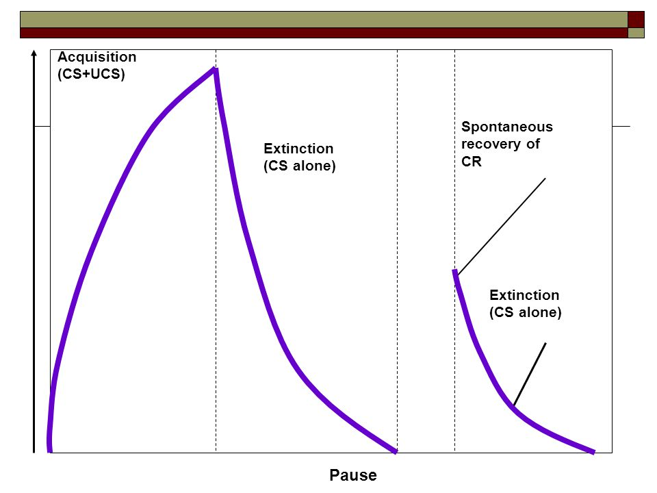 Strength of CR Pause Acquisition (CS+UCS) Extinction (CS alone) Extinction (CS alone) Spontaneous recovery of CR