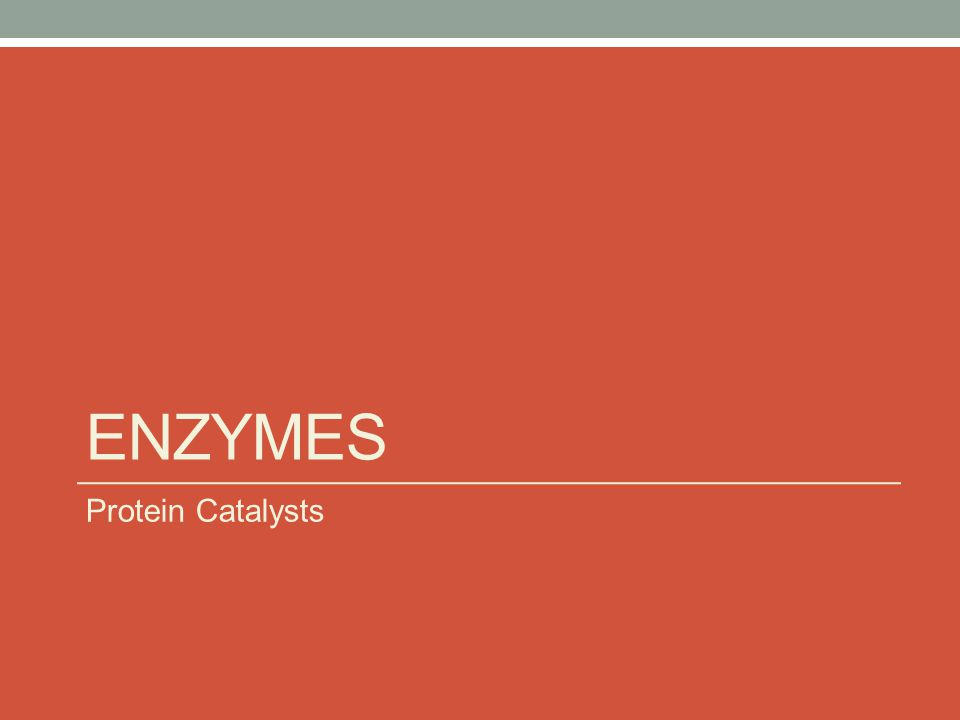 ENZYMES Protein Catalysts