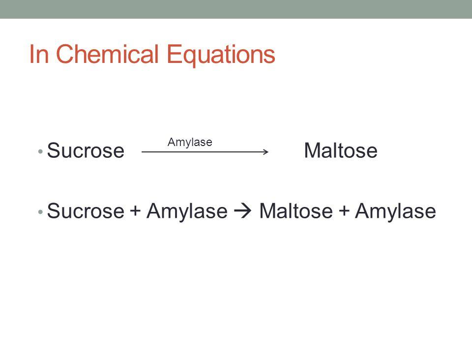 In Chemical Equations Sucrose Maltose Sucrose + Amylase  Maltose + Amylase Amylase