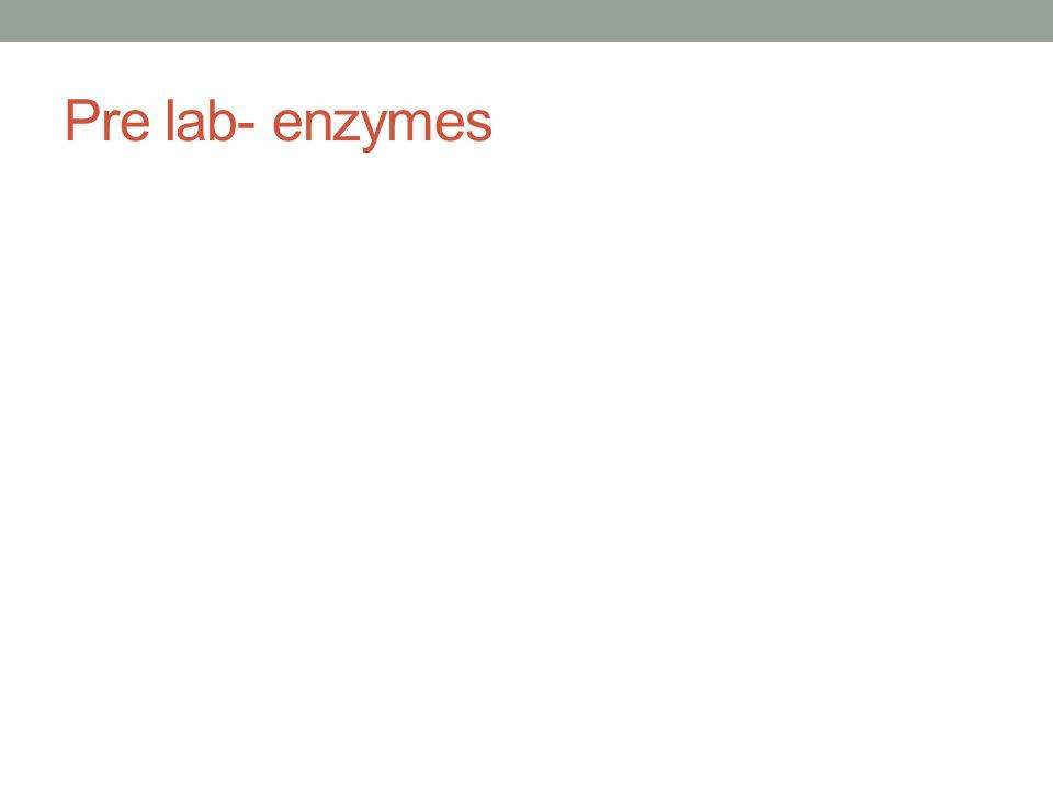 Pre lab- enzymes