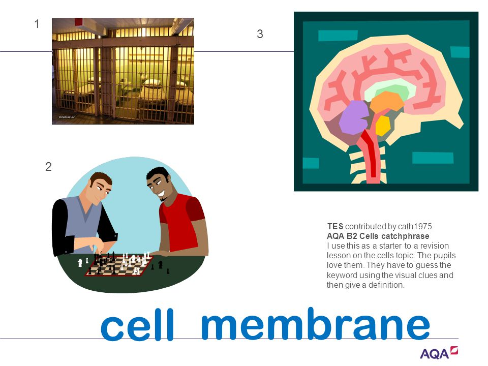 cell membrane TES contributed by cath1975 AQA B2 Cells catchphrase I use this as a starter to a revision lesson on the cells topic.