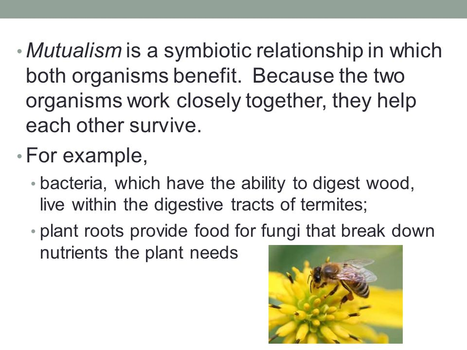 Mutualism is a symbiotic relationship in which both organisms benefit. Because the two organisms work closely together, they help each other survive.