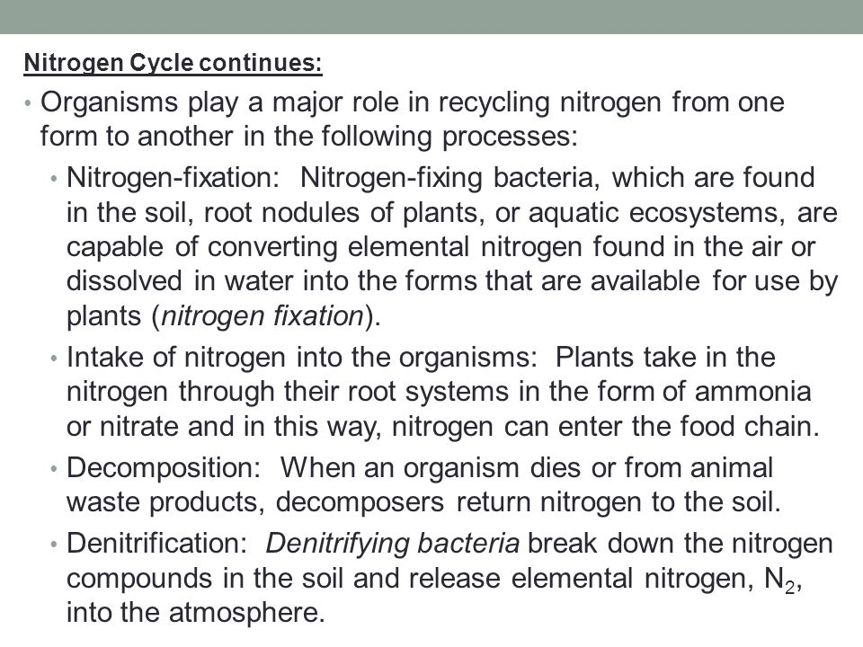 Nitrogen Cycle continues: Organisms play a major role in recycling nitrogen from one form to another in the following processes: Nitrogen-fixation: Ni