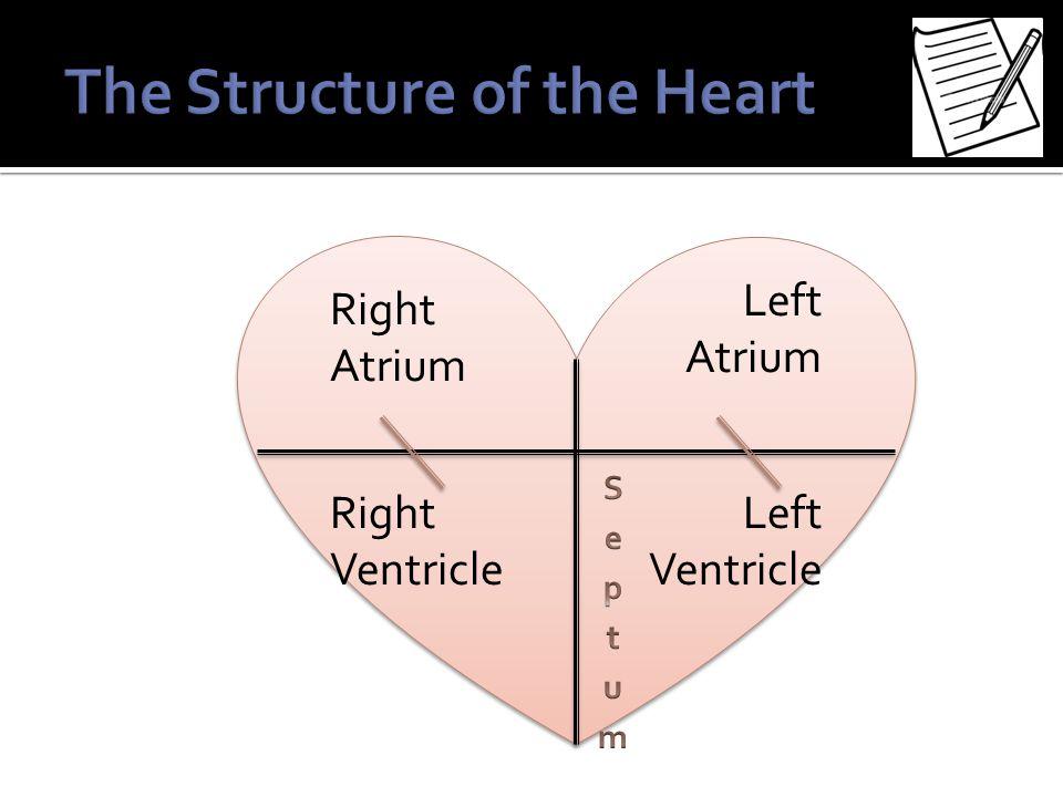 Right Atrium Left Atrium Right Ventricle Left Ventricle