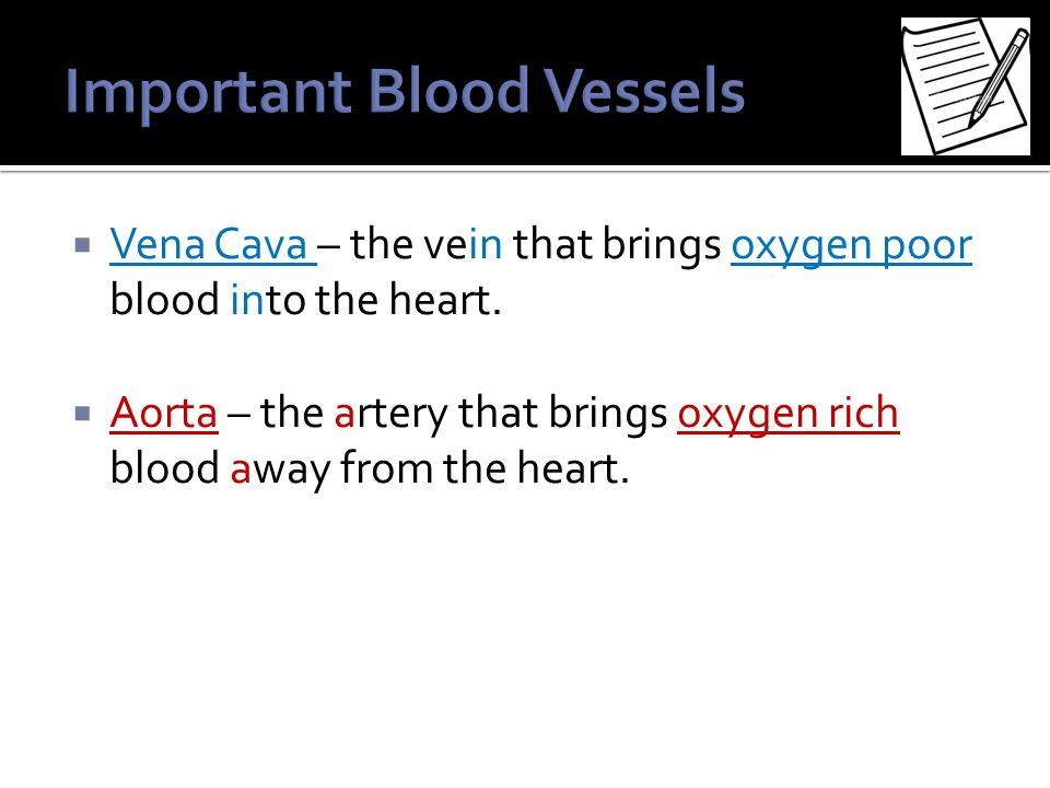  Vena Cava – the vein that brings oxygen poor blood into the heart.