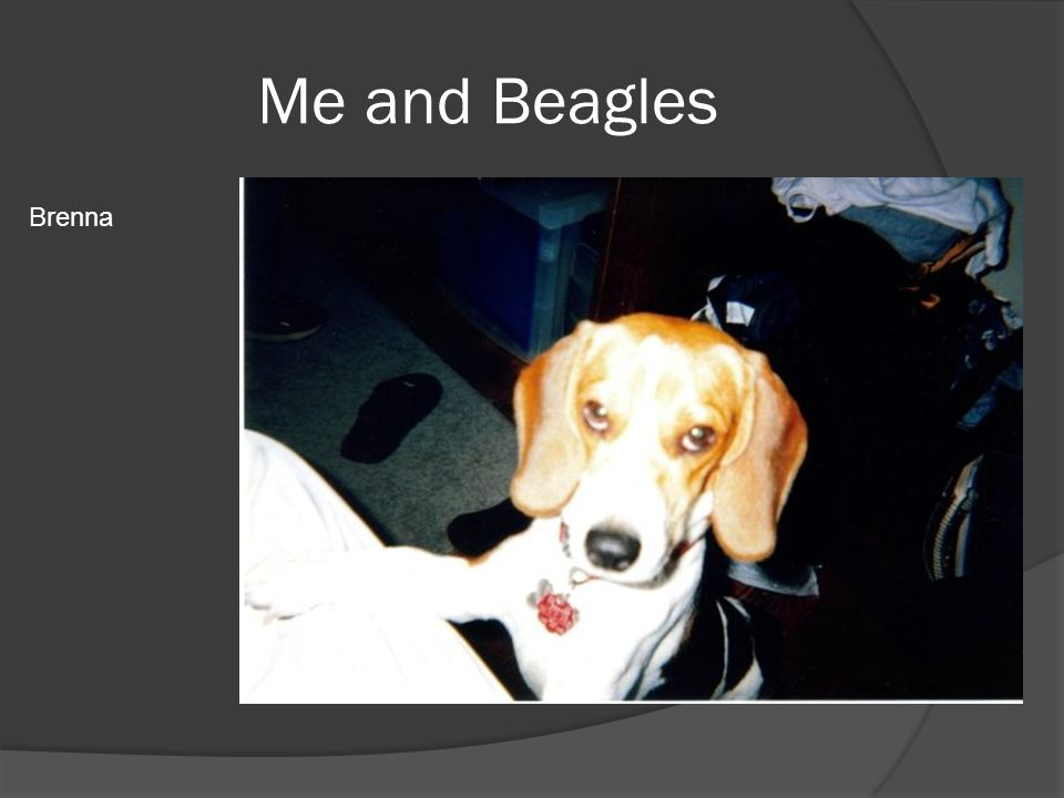 Me and Beagles My first beagle, Brenna. That's me sitting on the counter