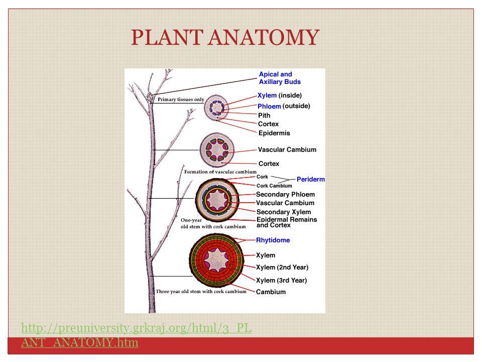 PLANT ANATOMY http://preuniversity.grkraj.org/html/3_PL ANT_ANATOMY.htm