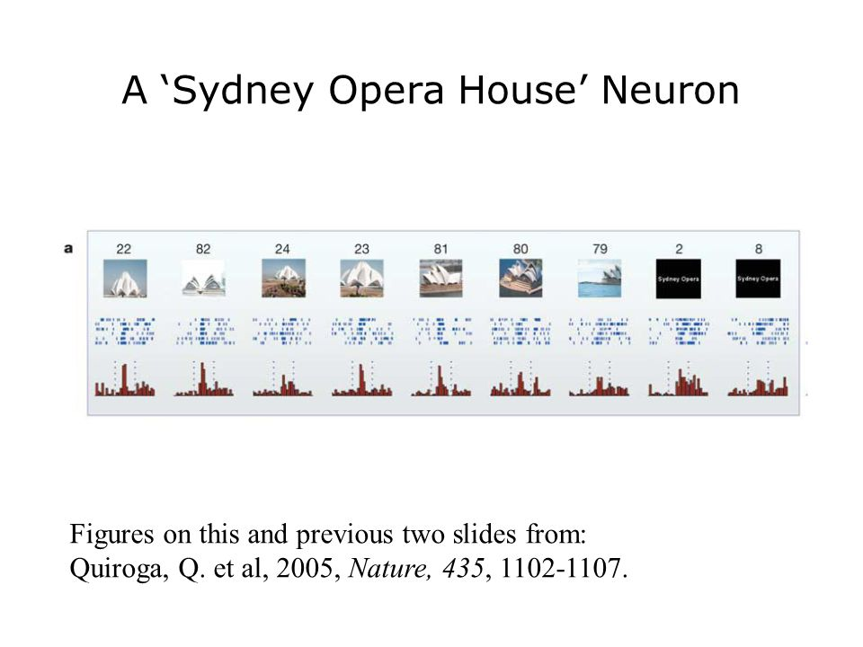 A 'Sydney Opera House' Neuron Figures on this and previous two slides from: Quiroga, Q.