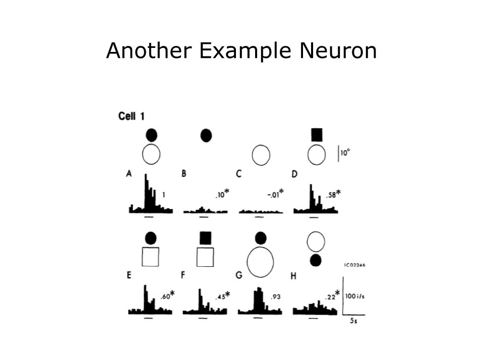 Example responses of cells to items in different categories Kiani et al, J Neurophysiol 97: 4296–4309, 2007.
