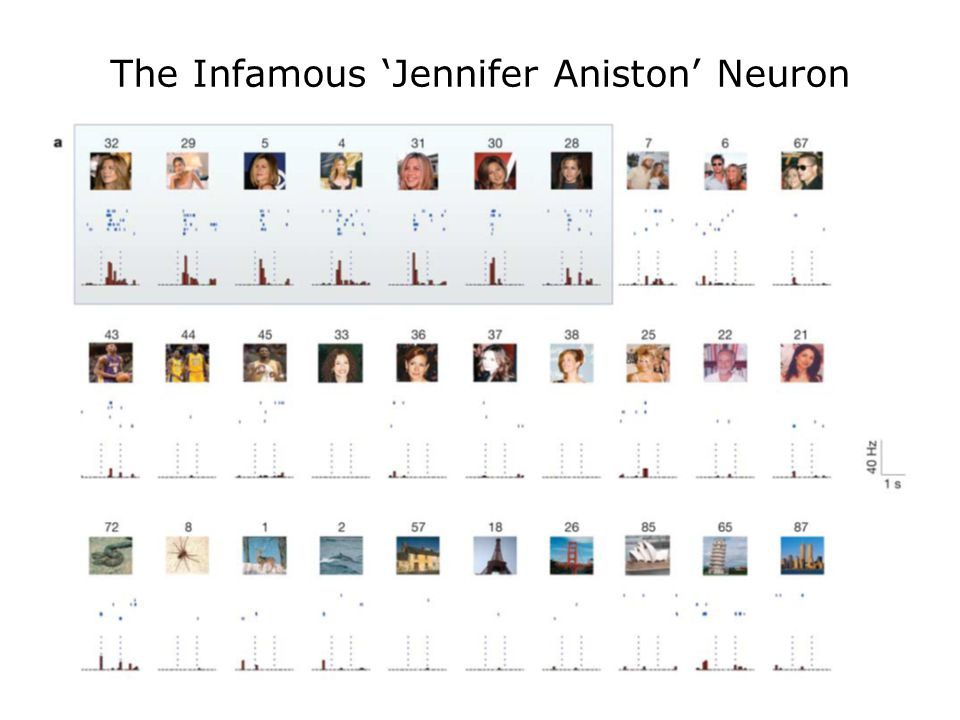 The Infamous 'Jennifer Aniston' Neuron