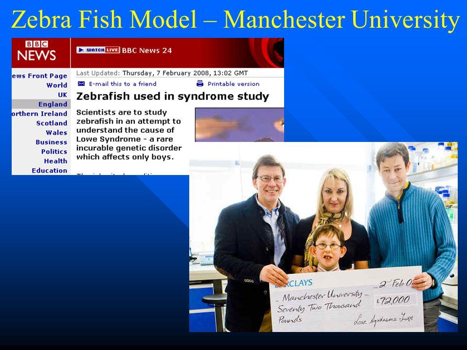 Zebra Fish Model – Manchester University