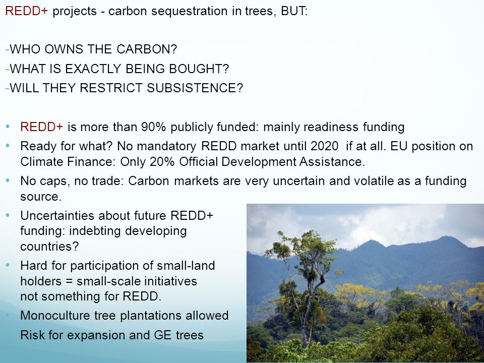 REDD+ projects - carbon sequestration in trees, BUT: - WHO OWNS THE CARBON.