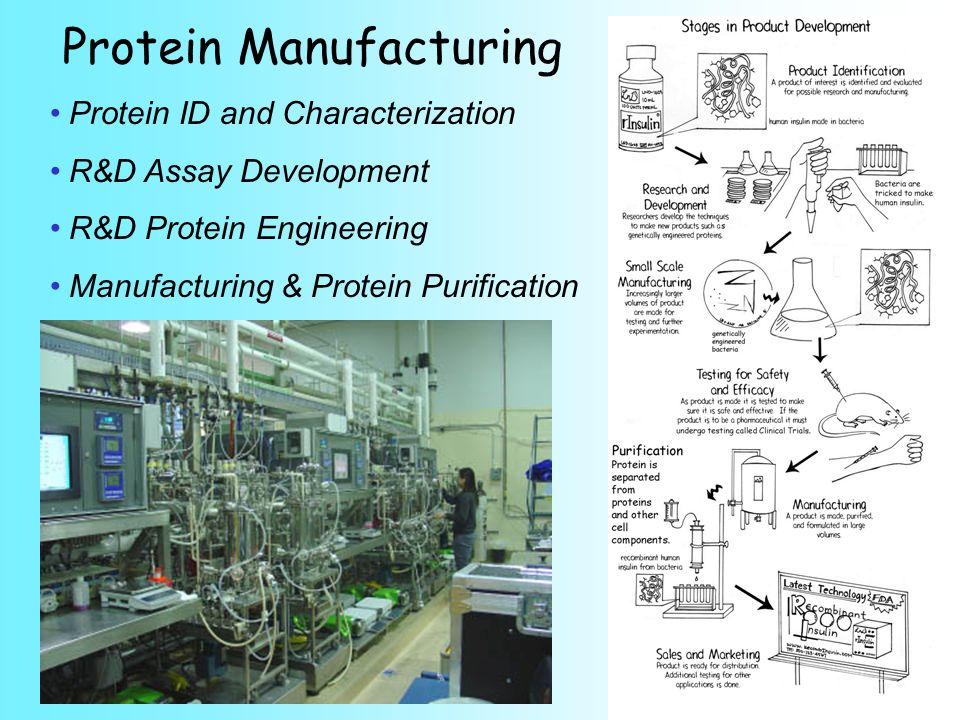 Protein Manufacturing Protein ID and Characterization R&D Assay Development R&D Protein Engineering Manufacturing & Protein Purification