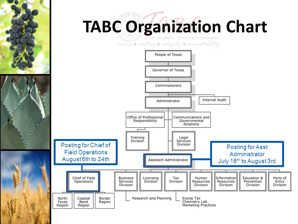 TABC Organization Chart Posting for Chief of Field Operations August 6th to 24th Posting for Asst Administrator July 16 th to August 3rd
