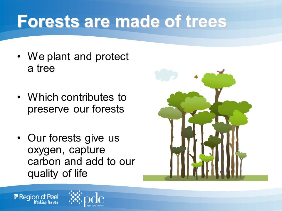 Forests are made of trees We plant and protect a tree Which contributes to preserve our forests Our forests give us oxygen, capture carbon and add to our quality of life