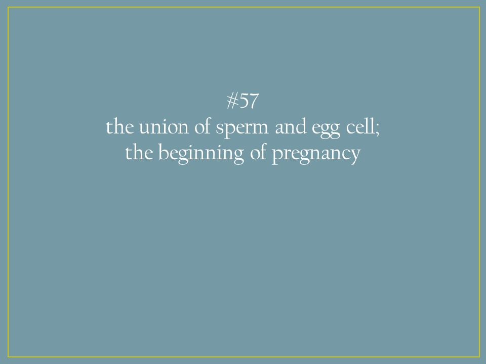 #57 the union of sperm and egg cell; the beginning of pregnancy