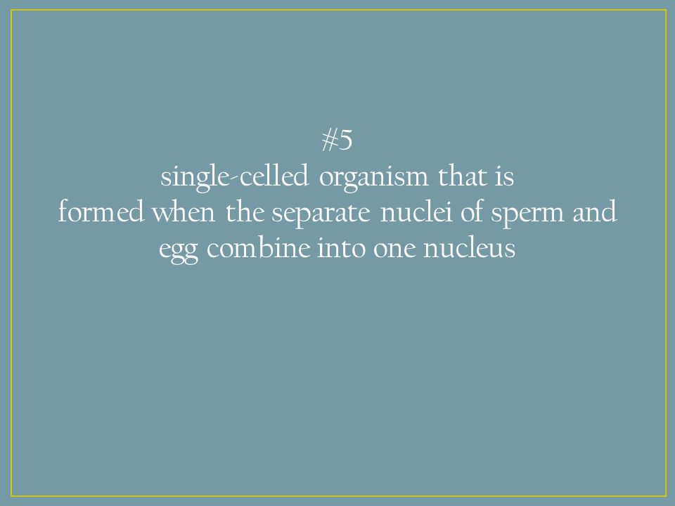 #5 single-celled organism that is formed when the separate nuclei of sperm and egg combine into one nucleus