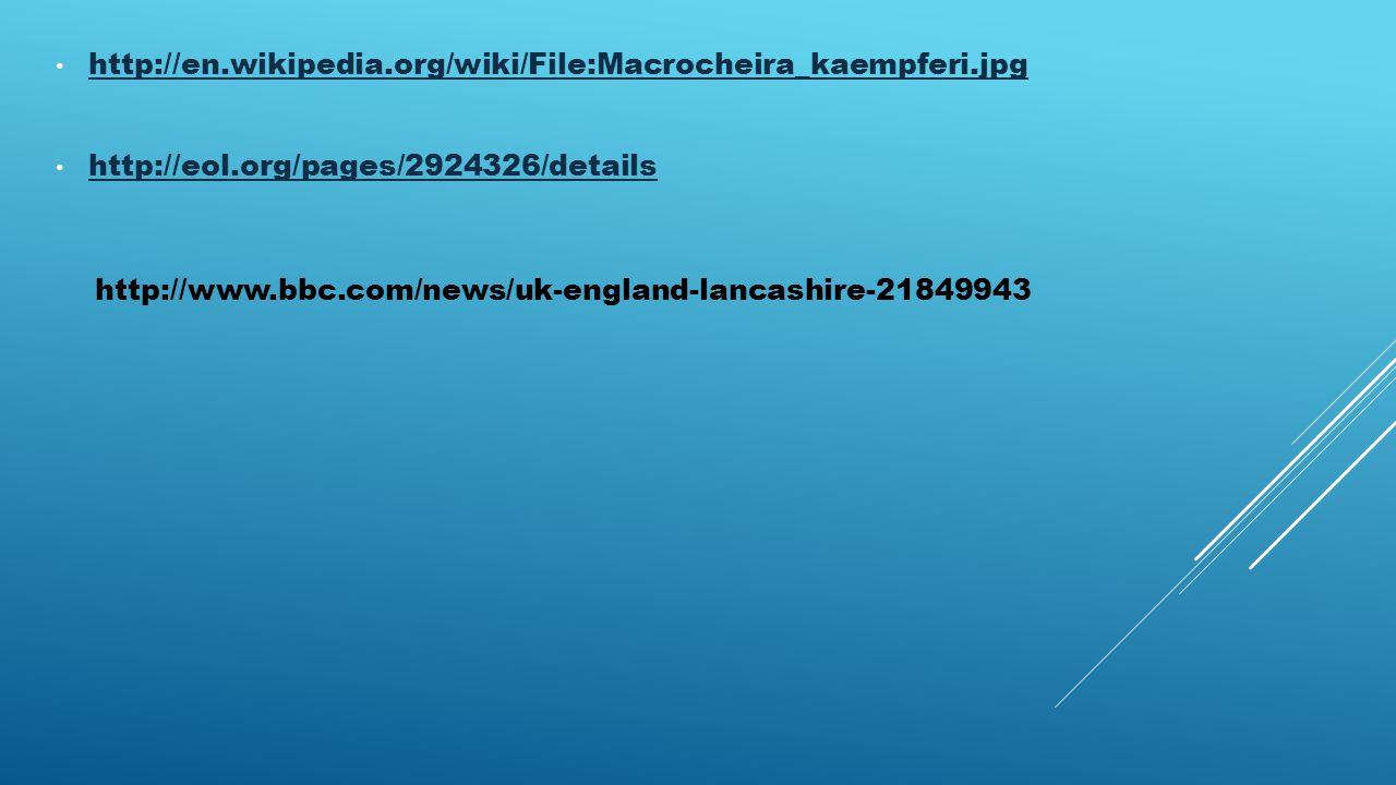 http://en.wikipedia.org/wiki/File:Macrocheira_kaempferi.jpg http://eol.org/pages/2924326/details http://www.bbc.com/news/uk-england-lancashire-21849943
