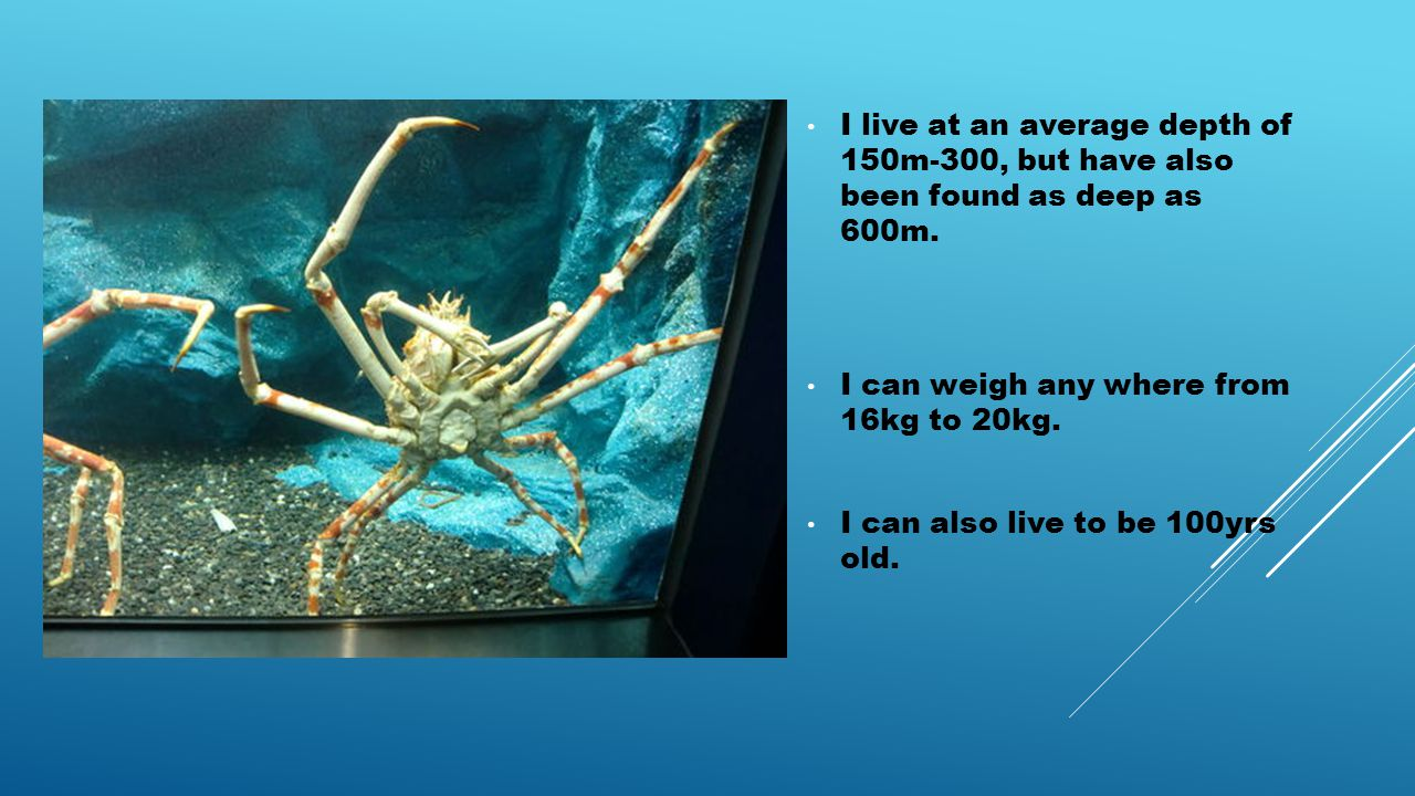 I live at an average depth of 150m-300, but have also been found as deep as 600m.