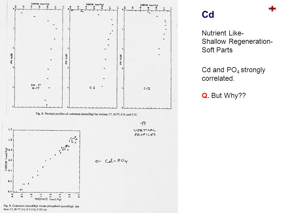 Cd and PO 4 strongly correlated. Q. But Why?? Cd Nutrient Like- Shallow Regeneration- Soft Parts