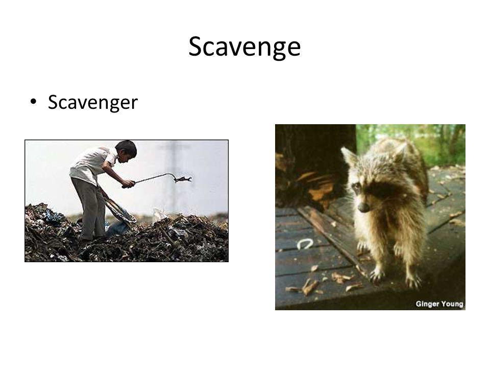 Scavenge Scavenger
