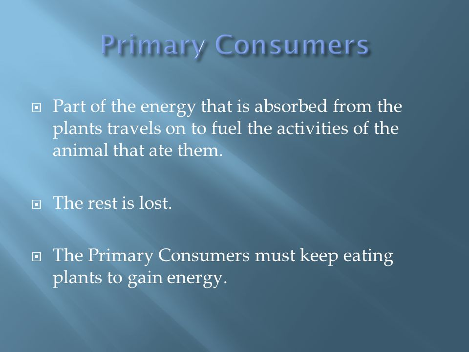  Part of the energy that is absorbed from the plants travels on to fuel the activities of the animal that ate them.