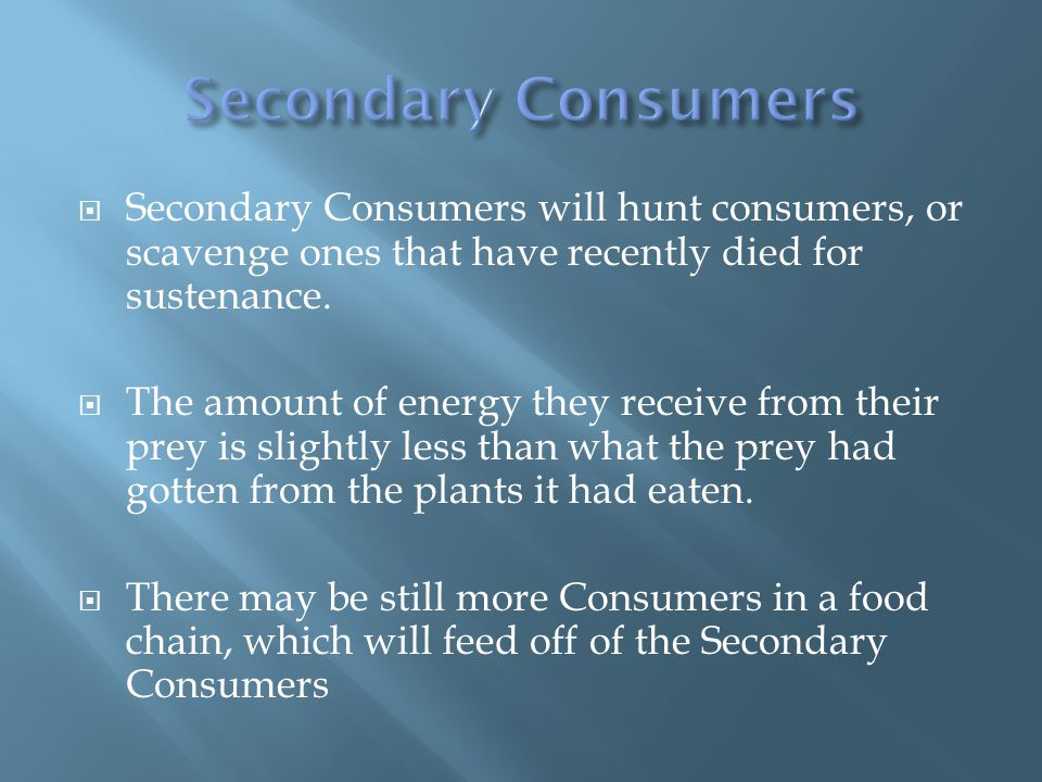  Secondary Consumers will hunt consumers, or scavenge ones that have recently died for sustenance.