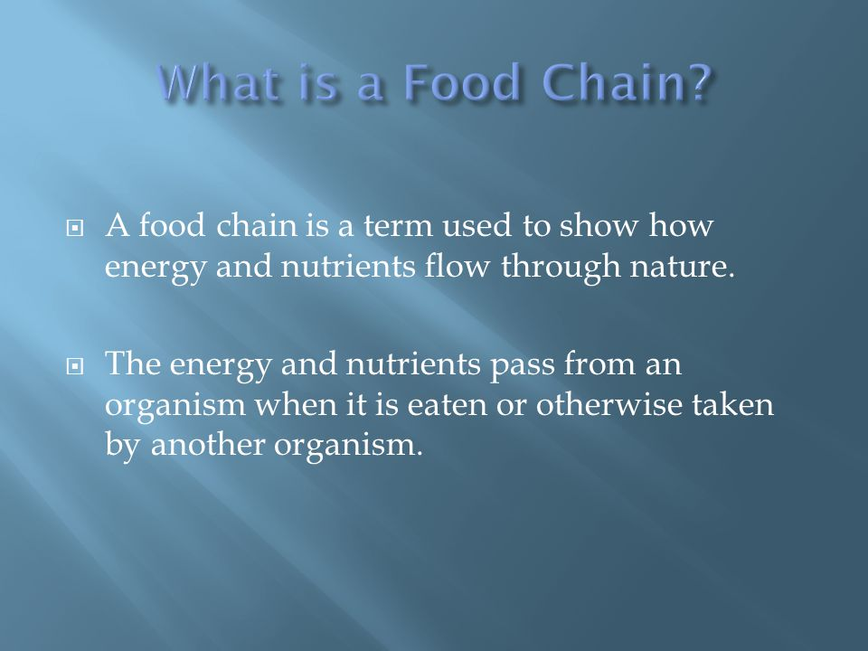  A food chain is a term used to show how energy and nutrients flow through nature.