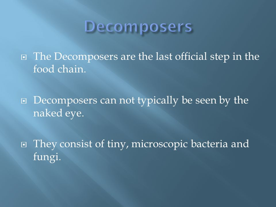  The Decomposers are the last official step in the food chain.