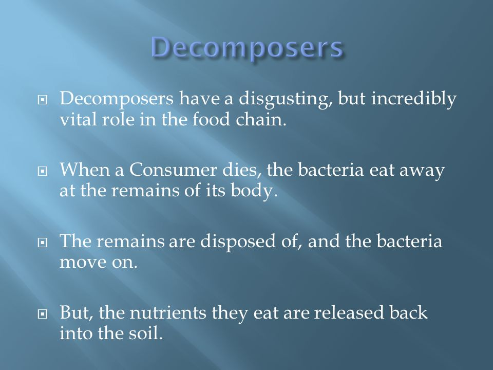  Decomposers have a disgusting, but incredibly vital role in the food chain.