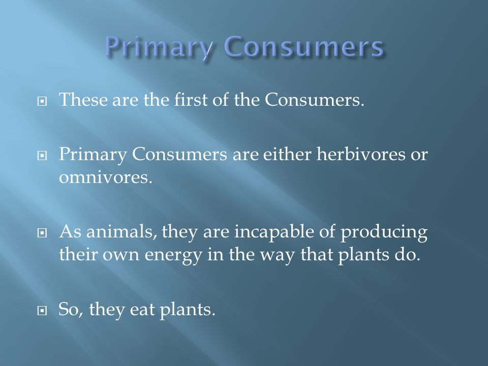  These are the first of the Consumers.  Primary Consumers are either herbivores or omnivores.