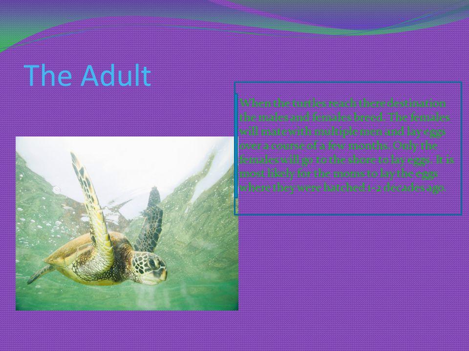 Diet -algae -sea grass -sea weed -crabs -jelly fish -coral