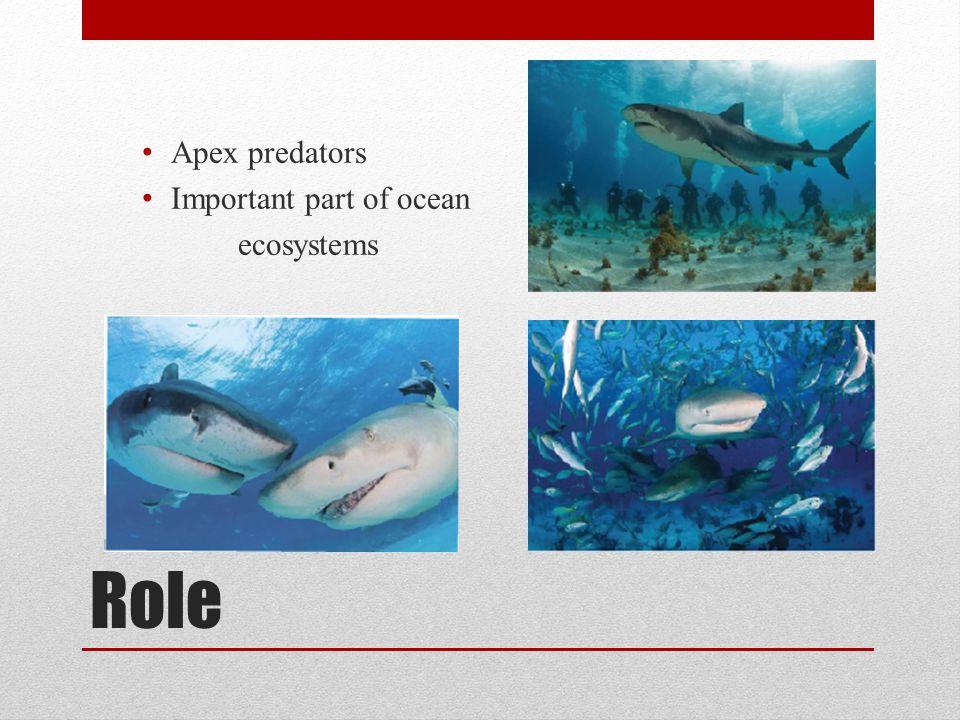 Role Apex predators Important part of ocean ecosystems