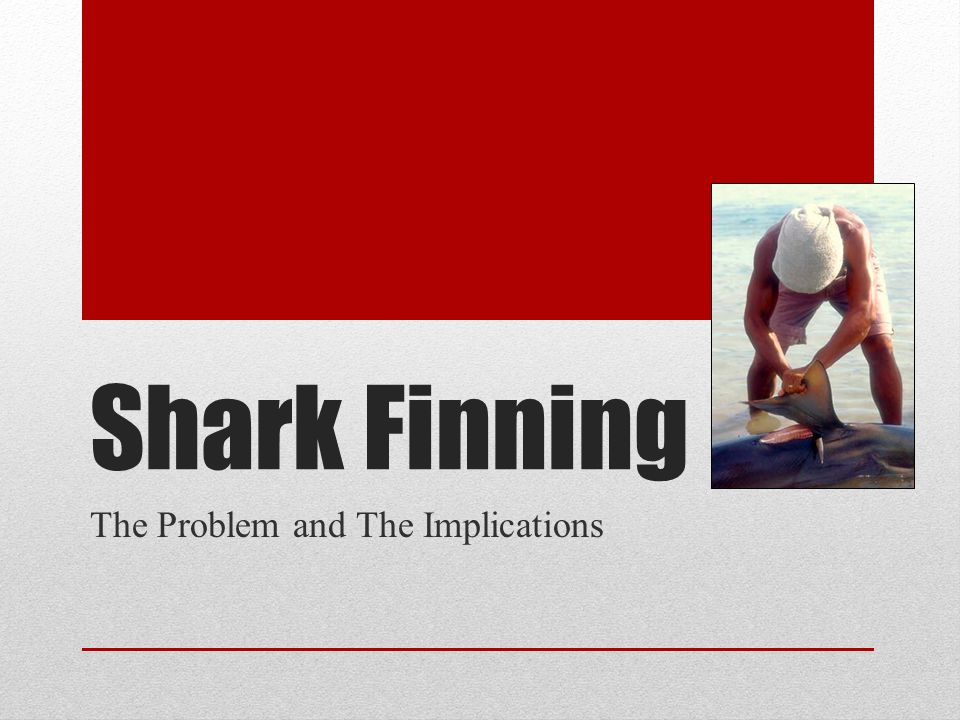 Shark Finning The Problem and The Implications
