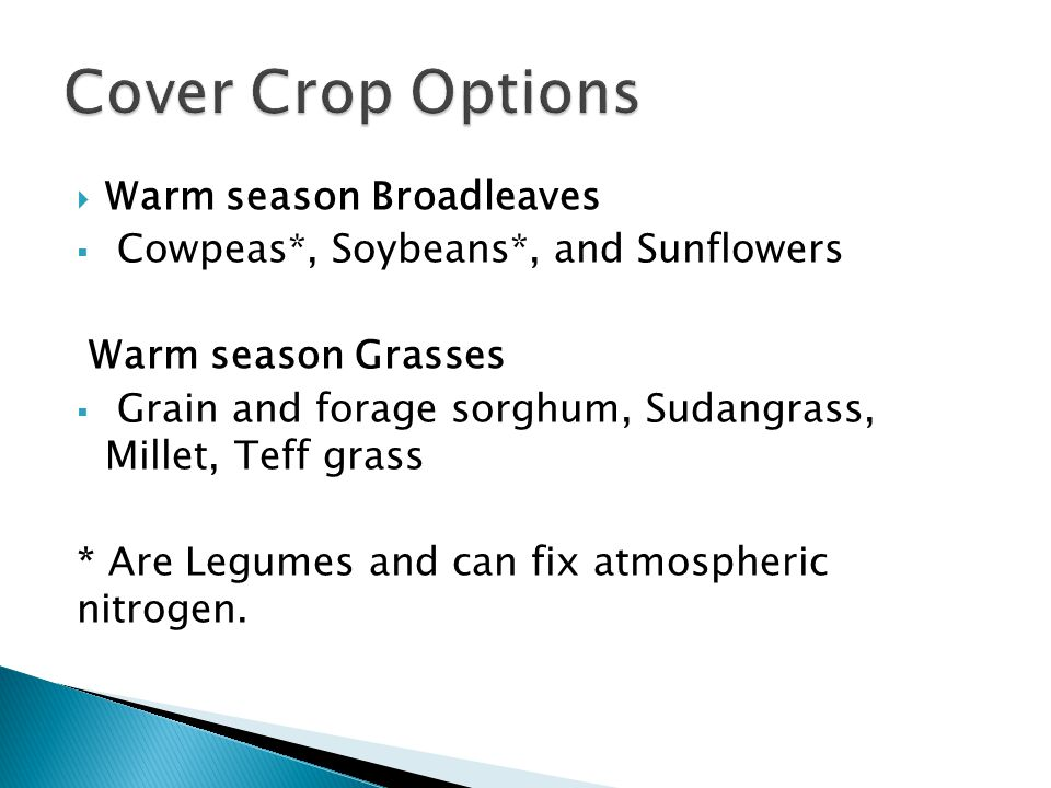  Warm season Broadleaves  Cowpeas*, Soybeans*, and Sunflowers Warm season Grasses  Grain and forage sorghum, Sudangrass, Millet, Teff grass * Are L