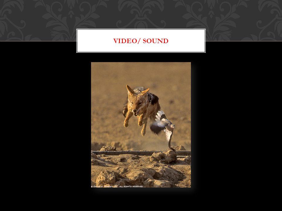 VIDEO/ SOUND