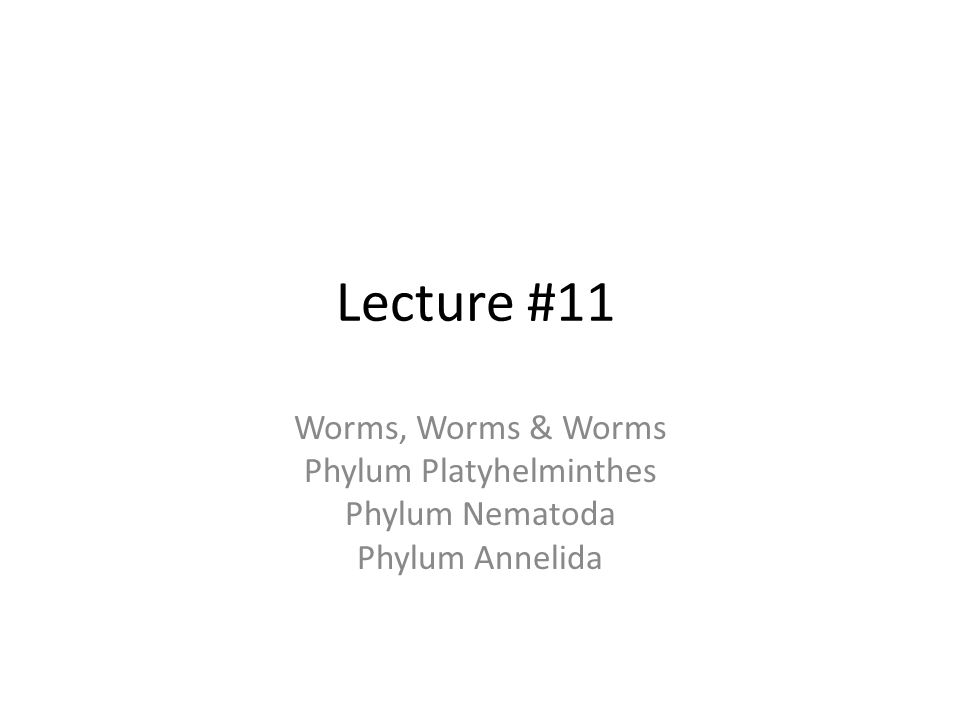 Lecture #11 Worms, Worms & Worms Phylum Platyhelminthes Phylum Nematoda Phylum Annelida