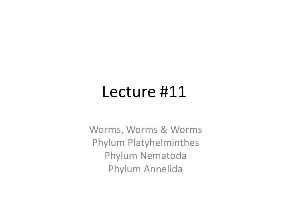 Features common to Phylum Echinodermata 1.triploblastic 2.