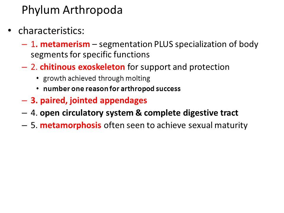 Phylum Arthropoda characteristics: – 1. metamerism – segmentation PLUS specialization of body segments for specific functions – 2. chitinous exoskelet