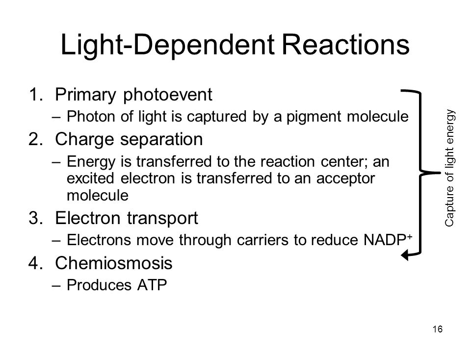16 Light-Dependent Reactions 1.Primary photoevent –Photon of light is captured by a pigment molecule 2.Charge separation –Energy is transferred to the reaction center; an excited electron is transferred to an acceptor molecule 3.Electron transport –Electrons move through carriers to reduce NADP + 4.Chemiosmosis –Produces ATP Capture of light energy