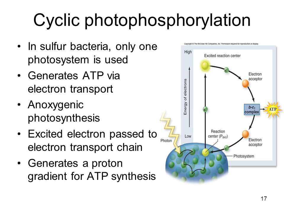 17 In sulfur bacteria, only one photosystem is used Generates ATP via electron transport Anoxygenic photosynthesis Excited electron passed to electron transport chain Generates a proton gradient for ATP synthesis Cyclic photophosphorylation