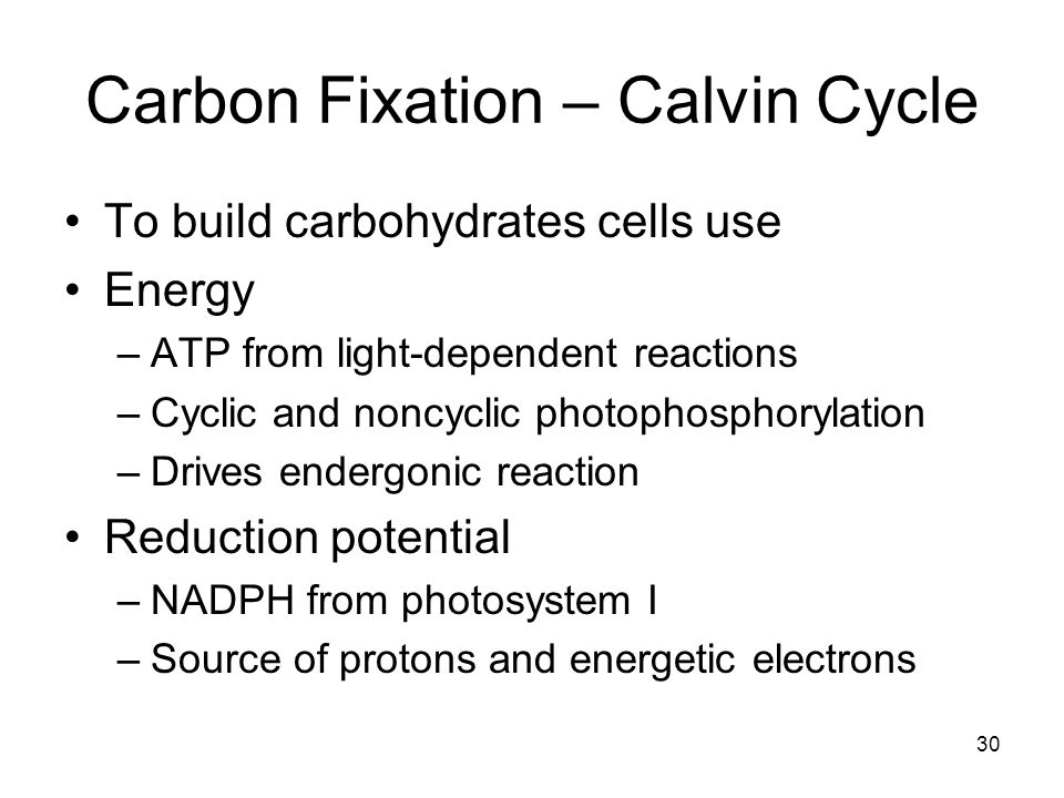 30 Carbon Fixation – Calvin Cycle To build carbohydrates cells use Energy –ATP from light-dependent reactions –Cyclic and noncyclic photophosphorylation –Drives endergonic reaction Reduction potential –NADPH from photosystem I –Source of protons and energetic electrons