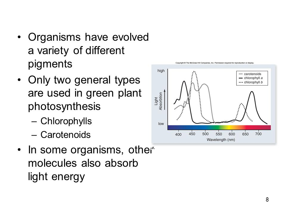 Organisms have evolved a variety of different pigments Only two general types are used in green plant photosynthesis –Chlorophylls –Carotenoids In some organisms, other molecules also absorb light energy 8
