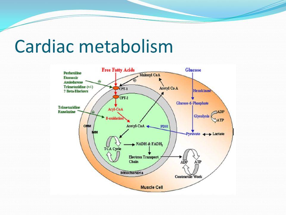 Cardiac metabolism