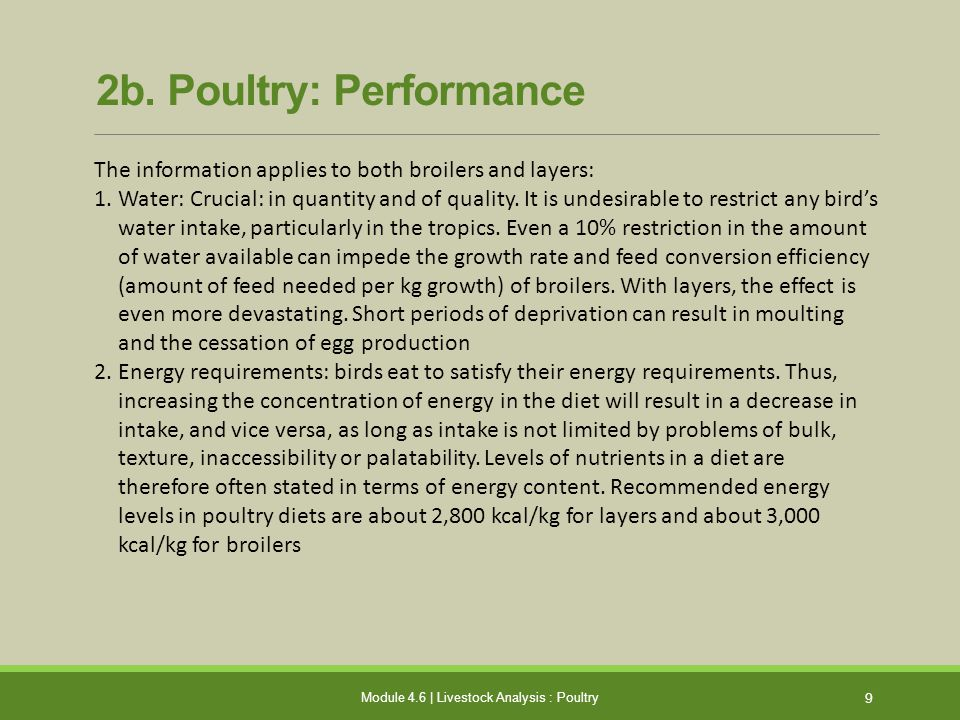 2b.Poultry: Performance (contd.) 1.Protein requirement: 10 amino acids are essential.
