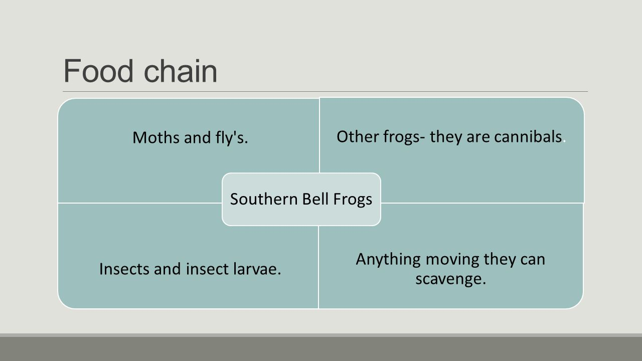 Food chain Moths and fly s.Other frogs- they are cannibals.