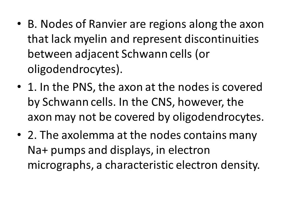 B. Nodes of Ranvier are regions along the axon that lack myelin and represent discontinuities between adjacent Schwann cells (or oligodendrocytes). 1.